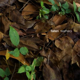 RB076 - fallen - feathers