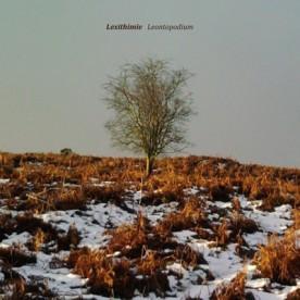 RB077 - Lexithimie - Leontopodium